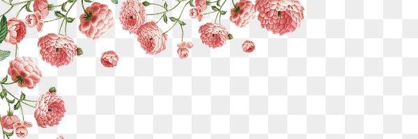 floral framed banner royalty free stock transparent png 569743 download premium png of vintage botanical banner design transparent png