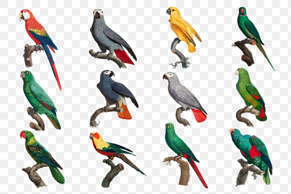Colorful parrot bird png set illustration