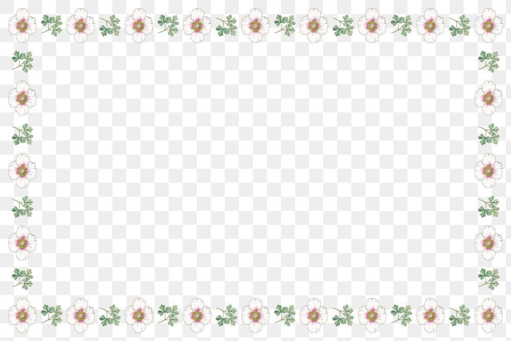 Vintage white poppy flower frame transparent png design element