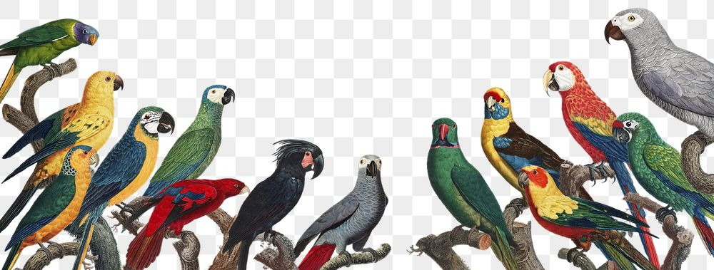 Png flock of macaws on branch illustration