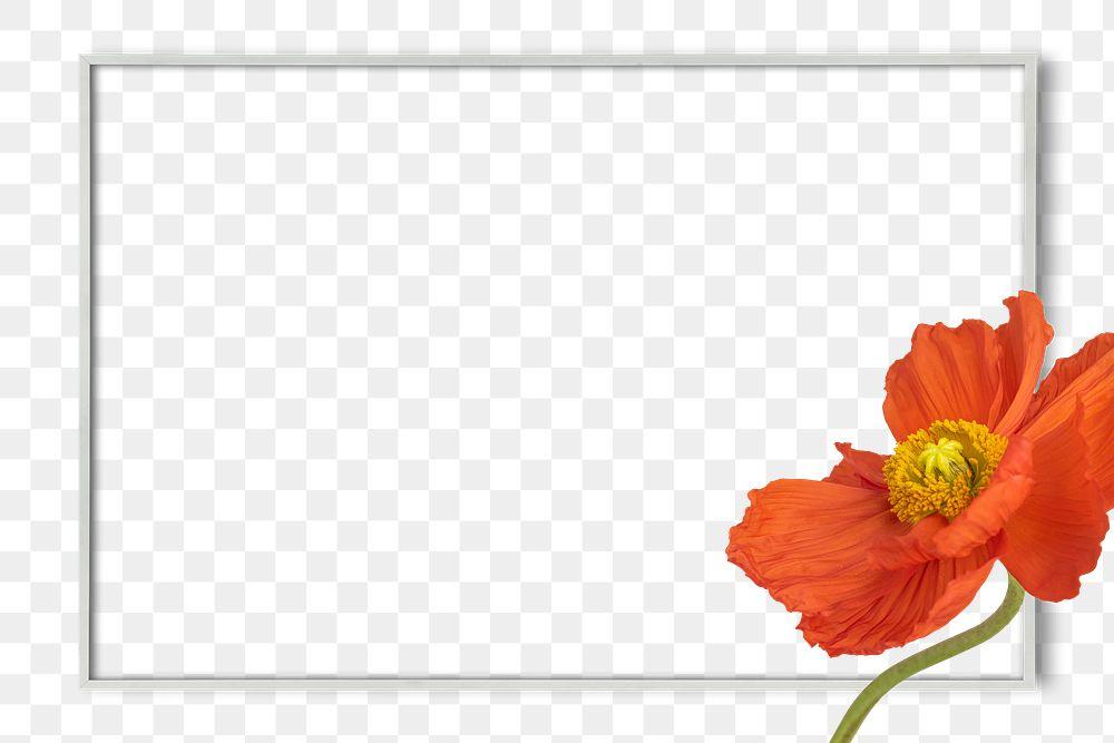 Closeup of red poppy flower frame design element