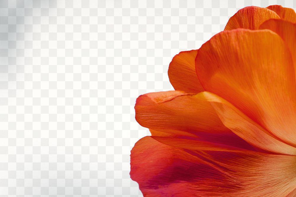 Closeup of red poppy flower petals design element