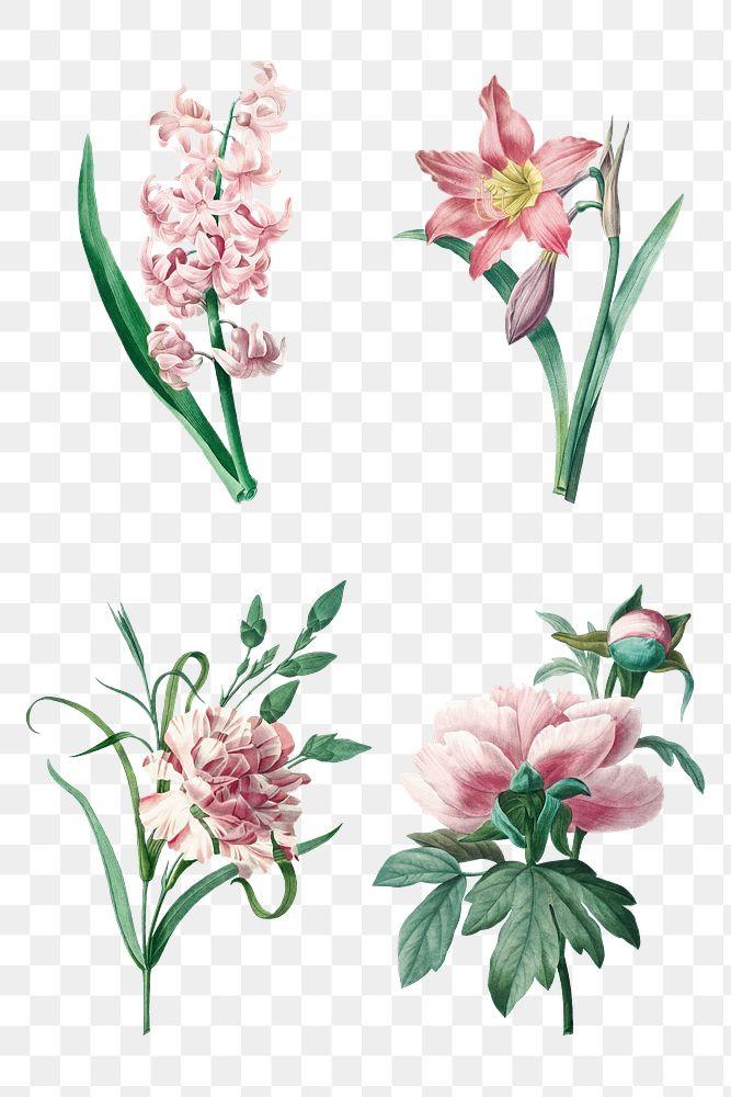 Pink png flower botanical art print set, remixed from artworks by Pierre-Joseph Redouté