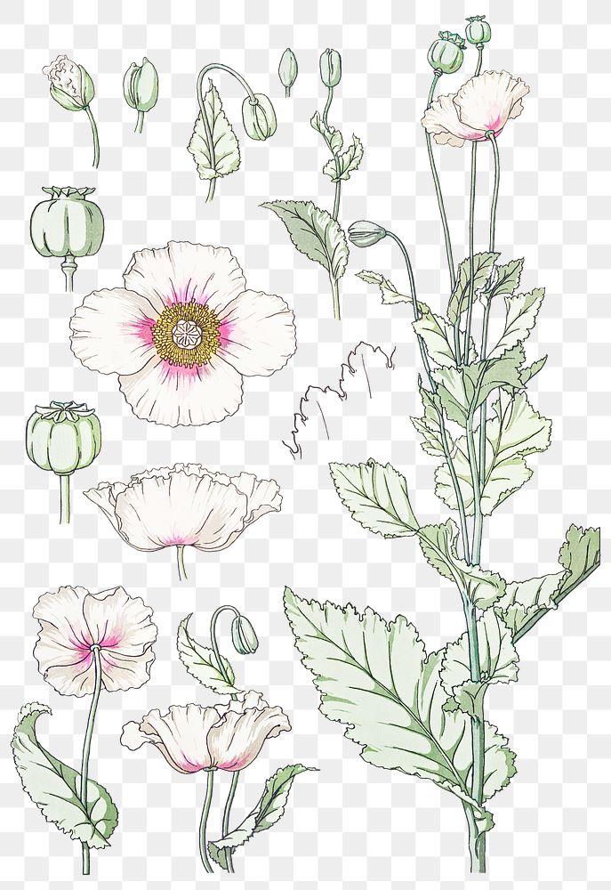 Vintage poppy flower parts transparent png design element