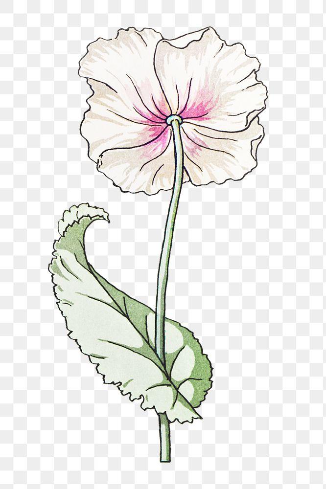 Vintage poppy flower transparent png design element