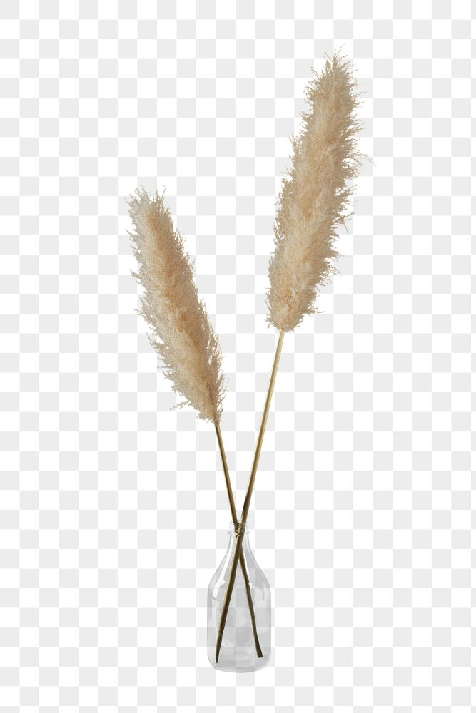 Dried pampas grass in transparent vase design element