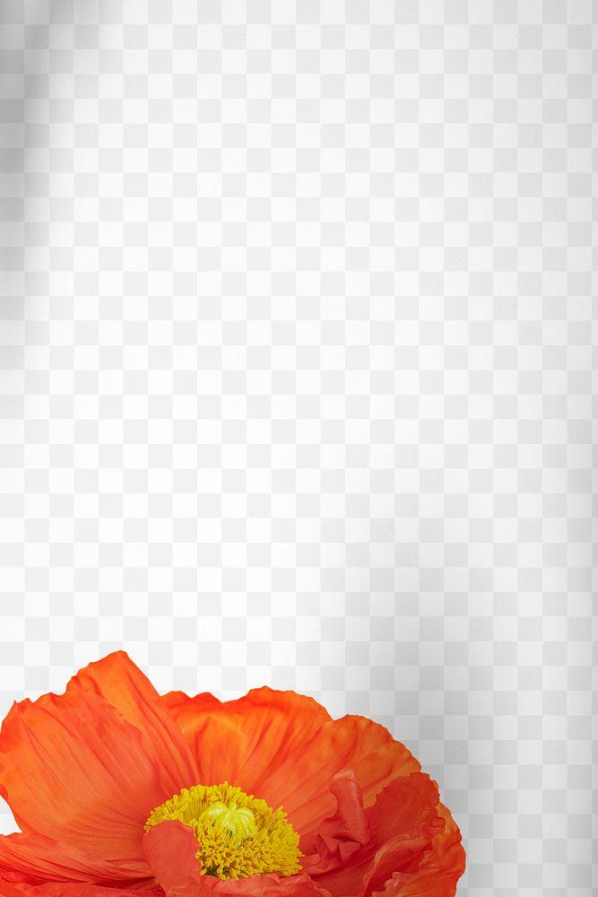Closeup of red poppy flower design element