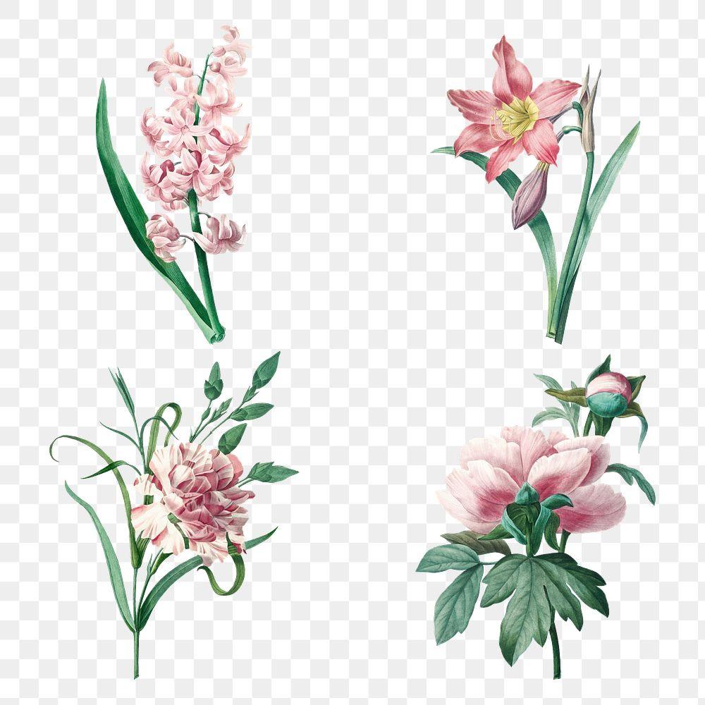 Botanical png pink flower art print set, remixed from artworks by Pierre-Joseph Redouté