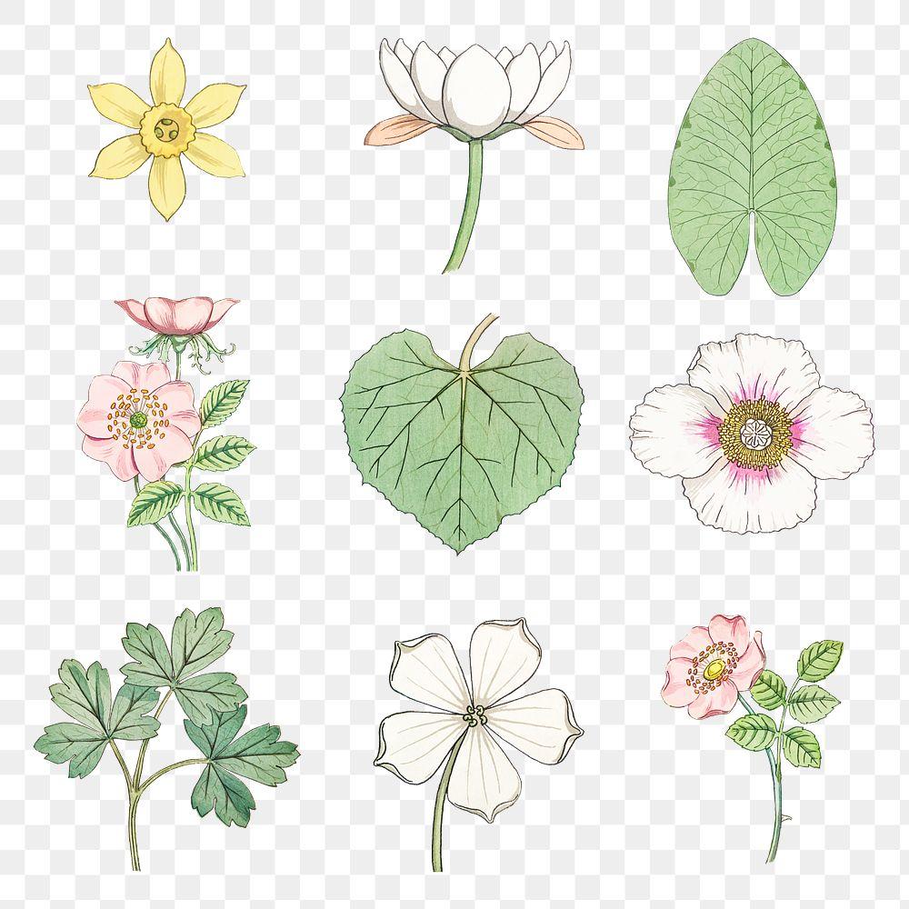 Vintage flower and leaf transparent png design element