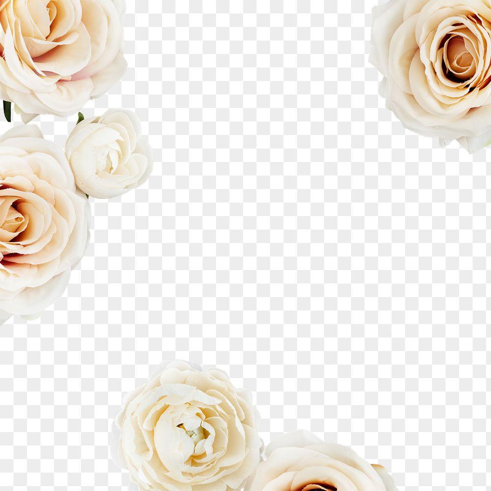 White rose frame transparent png