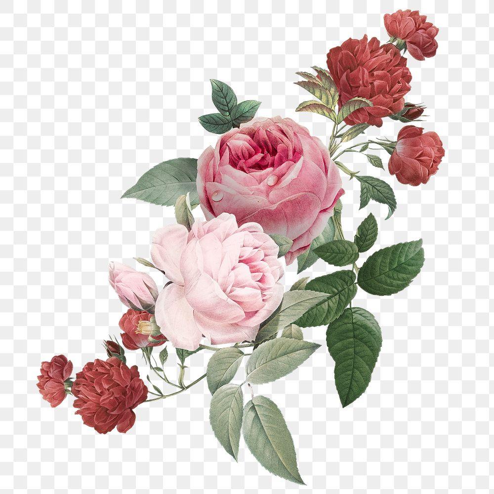 Elegant png pink roses flowers bouquet illustration