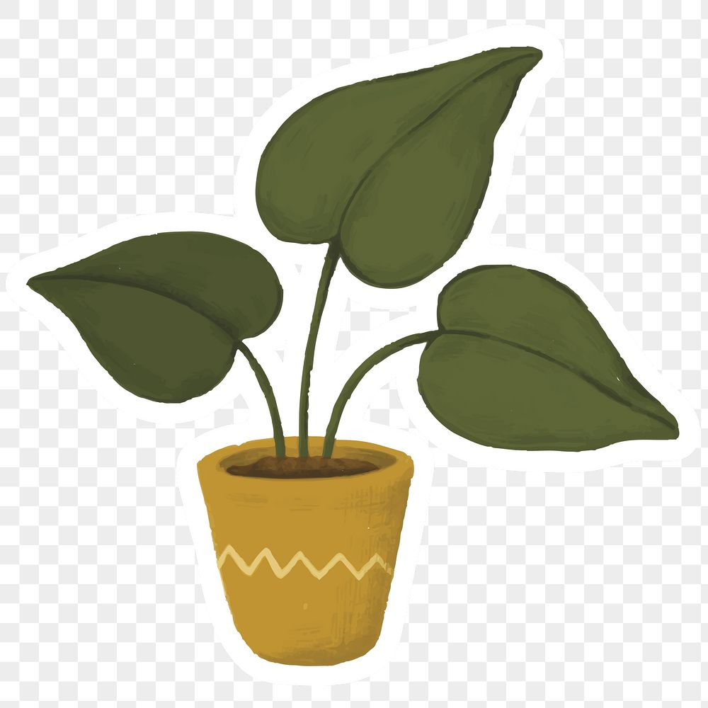 Heartleaf philodendron in a pot sticker